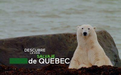 Guía de imperdibles para amantes de la vida salvaje en Quebec